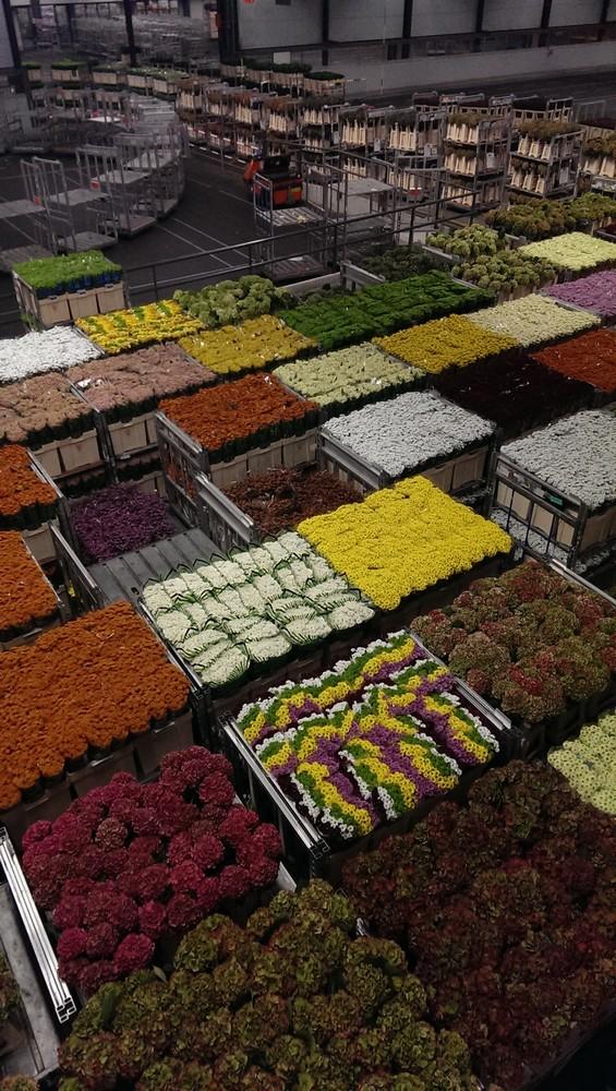 FlowerAuction1
