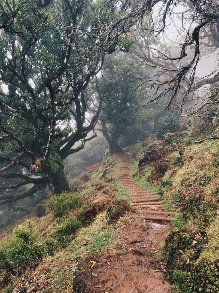 Madeira Feenwald